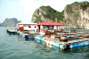 Cong Dam Fishing Village- Ha Long Attractions
