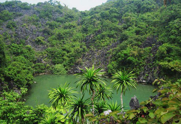 Bai Tu Long national park-a home to many pieces of precious floral and fauna