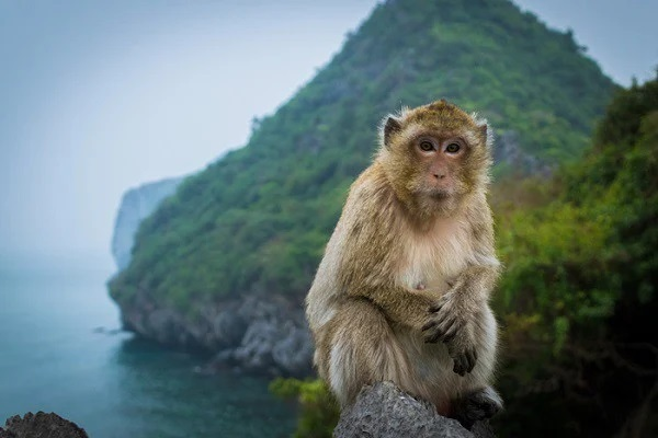 Remember to visit Monkey island to admire lovely monkeys here